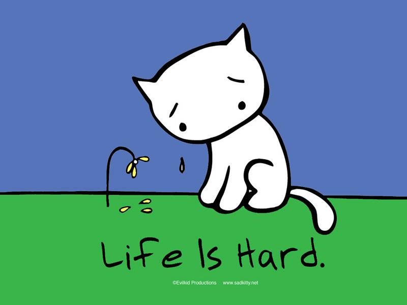sad kitty, life is hard