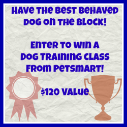 dog training class giveaway