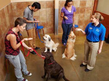 Dog Training Workshops
