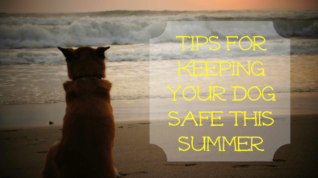 summer dog tips