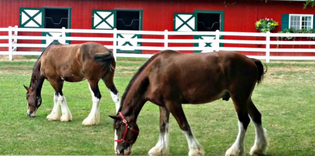 clydesdales grants farm