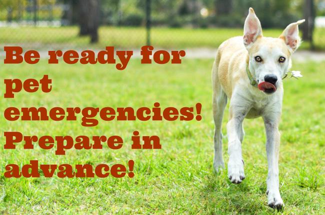 prepare pet emergencies