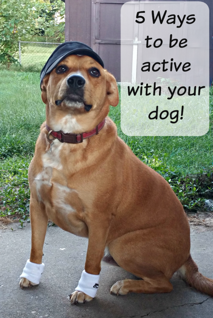 be active with dog