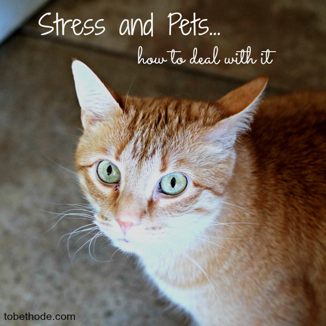 Stress and pets… how to deal with it