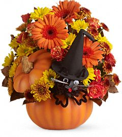 teleflora bewitched cat bouquet