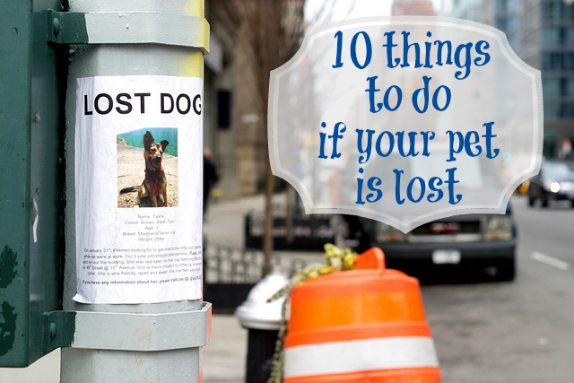 lost pet signs